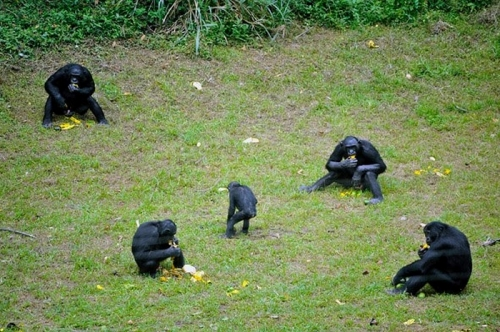 gabon,ali bongo,can 2012,sylvia bongo,michel ogandaga,libreville,paris,bénin,burkina faso,sénégal,cameroun